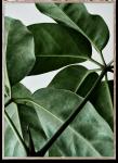 Plakat GREEN HOME 01 50x70