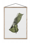 Plakat A3 FLOATING LEAVES 04