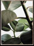 Plakat GREEN HOME 03 50x70