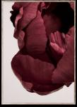 Plakat PEONIA 02 30x40